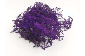 Dried Tatarica Purple